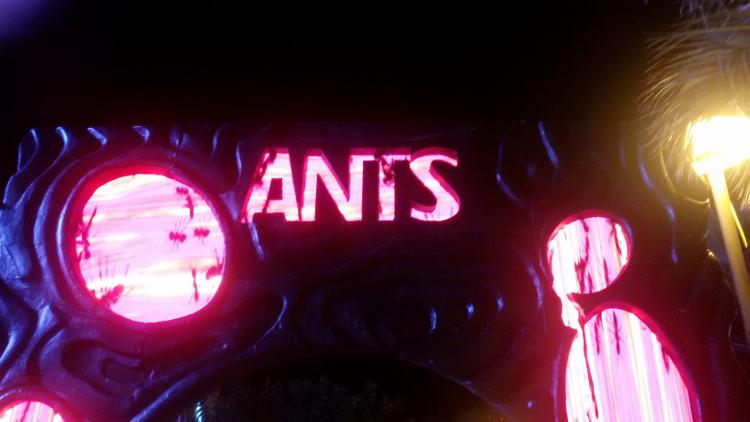 ushuaia discoteca ibiza ants